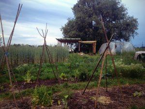 Planter Planter at Moutgaard @ Gemeentehuis Outgaarden | Hoegaarden | Vlaanderen | België
