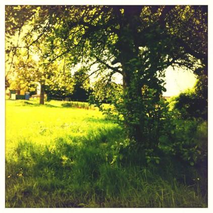 snoeien van bomen